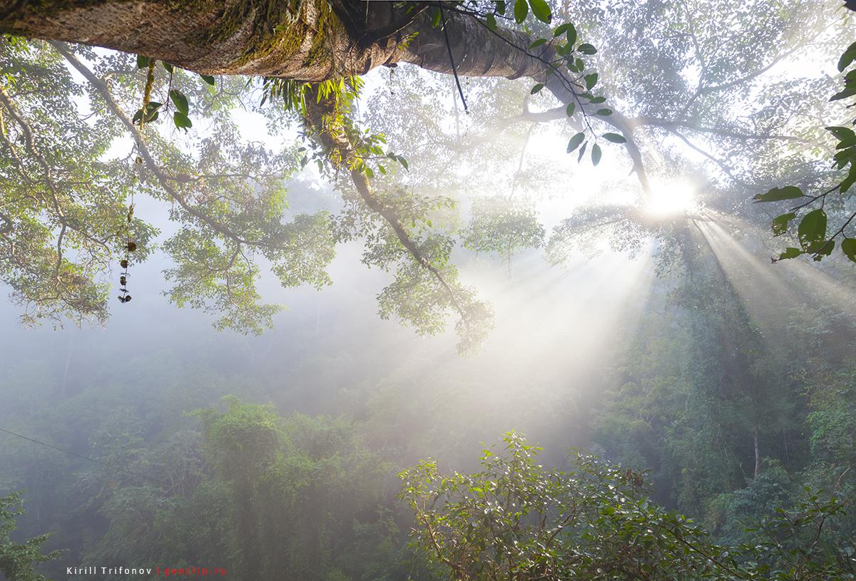 Jungle in Nam Kan National Park in Laos