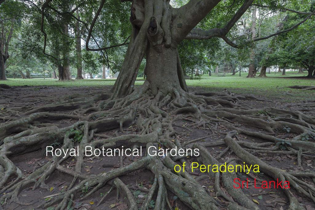 Видео экскурсия по саду Передения