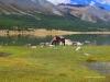 Horse eat grass at mountain lake