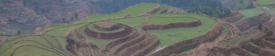 рисовые терассы Лунцзи (龙脊) округа Лонгшен (龙胜)