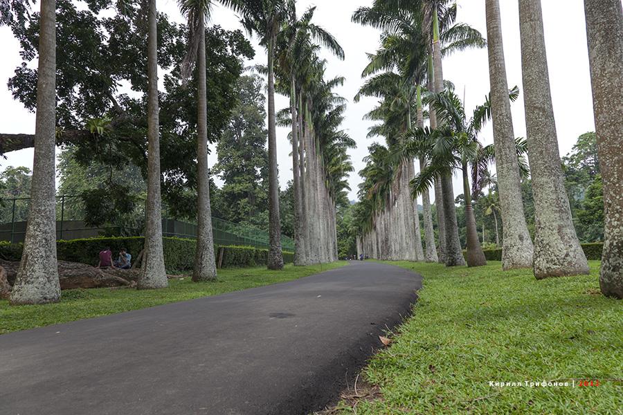 Ботанический сад Перадения