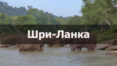 Видео Путеводитель по Шри-Ланке