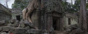 Храм Ta Prohm в Ангкоре
