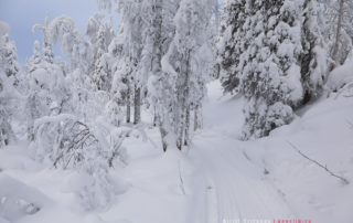 Дорога на гору Кивакка в парке Паанаярви