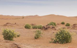 Дюны в Erg Chigaga