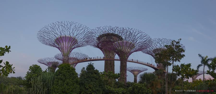 Сады-у-залива-в-Сингапуре